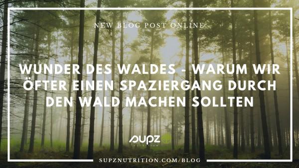 Wunder-des-Waldes-BLOG