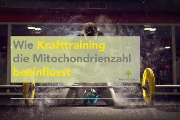 Mitochondrien-Blog